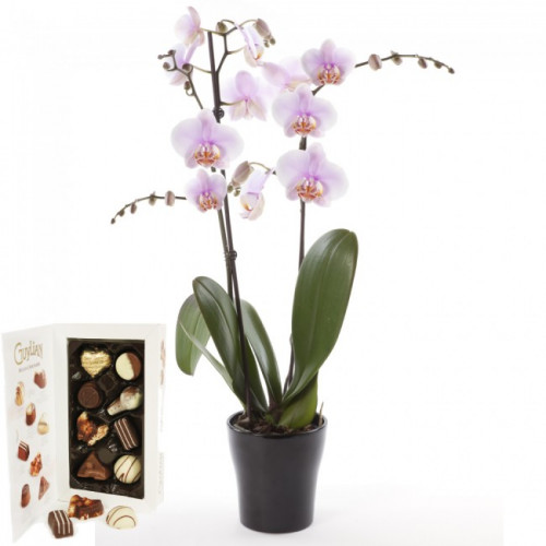 Mothers Day Orchids Galway