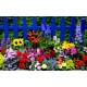 order Summer Flowers Galway