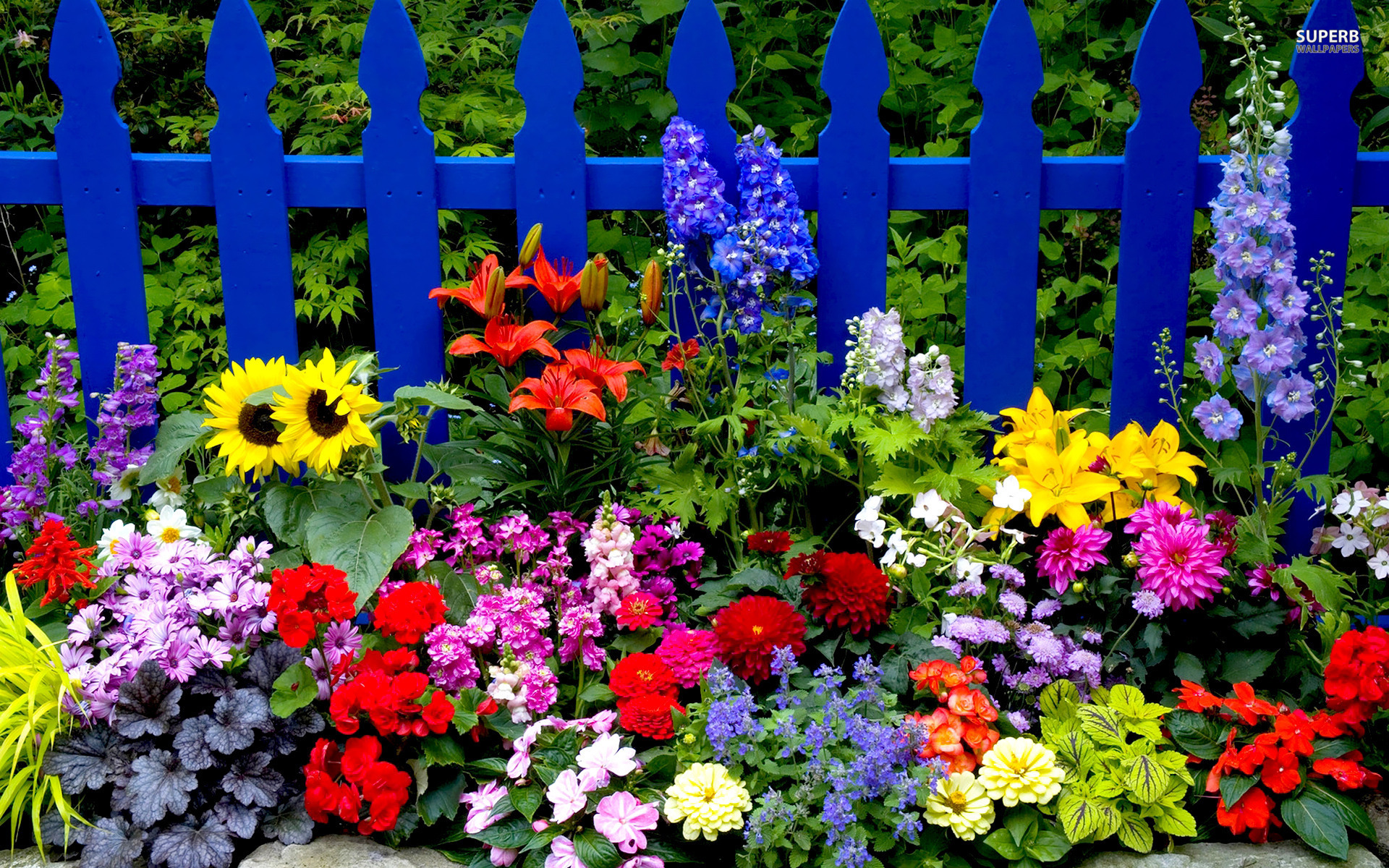 Image result for summer flowers